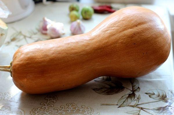 Популярный сорт тыквы Жемчужина
