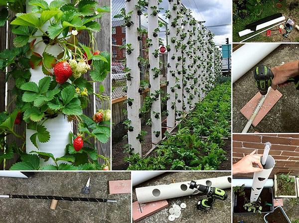 Вертикальное выращивание позволяет применить креативные идеи