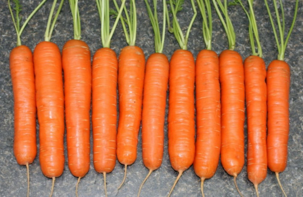Many people consider Nantes to be the most delicious carrot