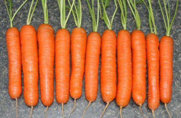 Многие считают Нантскую самой вкусной морковью
