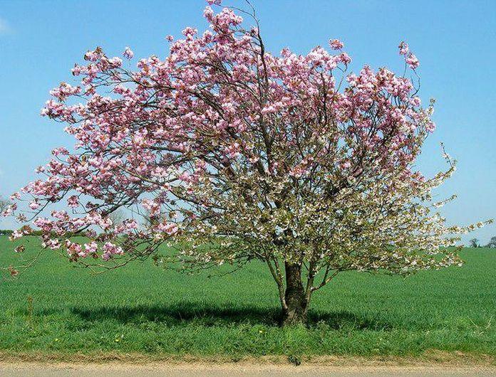 Яблоня хорошо отзывается на внесение минеральных и органических удобрений