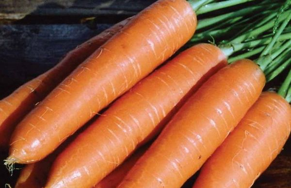 Rota-Riesen Carrots Resistant to Cold