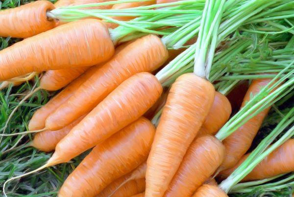 Морковь Московская зимняя может хранится до весны