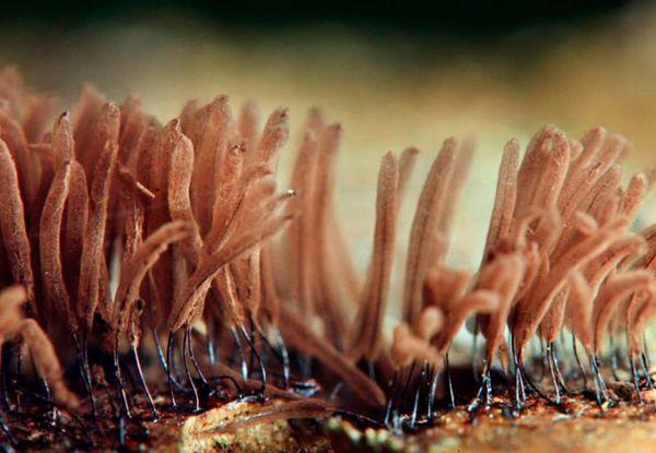 Мицелий - это самая обыкновенная грибница