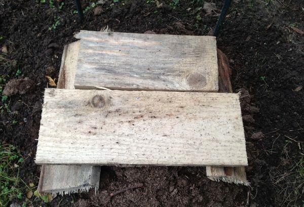 Лоза винограда также укрывается плотными деревянными щитами