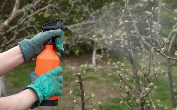Обработка вишни весной от болезней