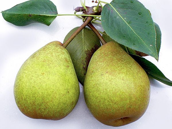 Средняя масса одного фрукта составляет 80–100 г