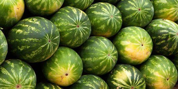 Сорванный плод съесть можно в течение 2-х недель