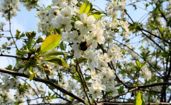 Сильные порывы ветра усложняют насекомым сбор пыльцы