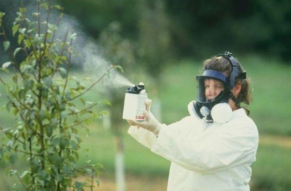 Химические опрыскивания устранят монилиоз