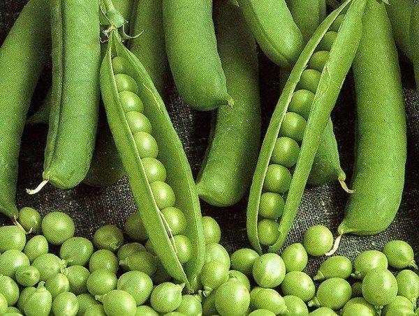 Урожай бобов можно собирать по мере созревания