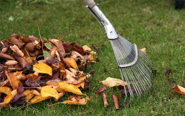 С наступлением холодов приступайте к «генеральной уборке» сада