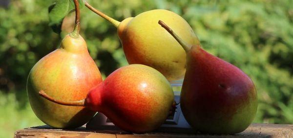 У сорта хорошие товарные характеристики и вкус плодов