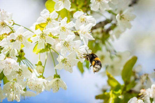 Цветки могут опыляться не только насекомыми