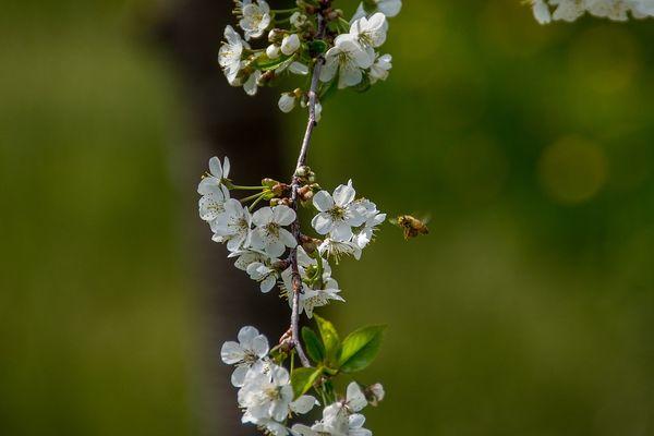 Важно подобрать сорта, которые практически одновременно цветут