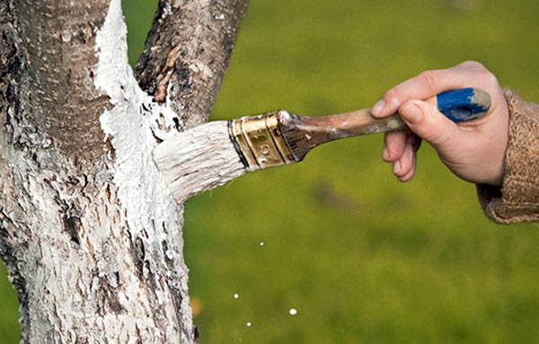 Борьба с листоверткой начинается с соблюдения агротехнических требований
