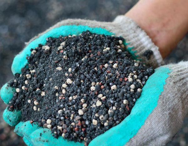 Подкормка винограда осенью тоже является важным этапом