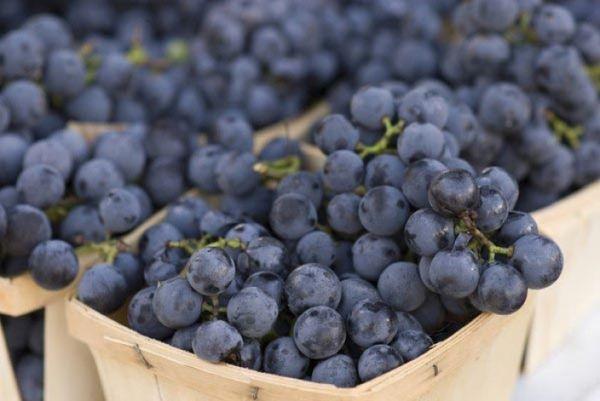 Виноград Изабелла известен уже более двухсот лет