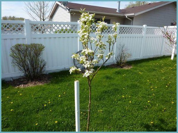 Сажать саженцы можно весной или осенью