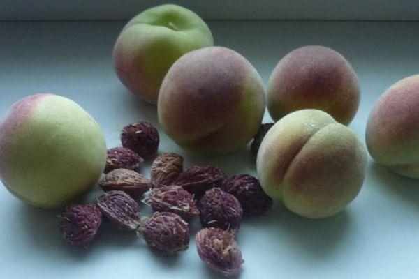 Персиковые косточки рекомендуют высаживать в осенний период