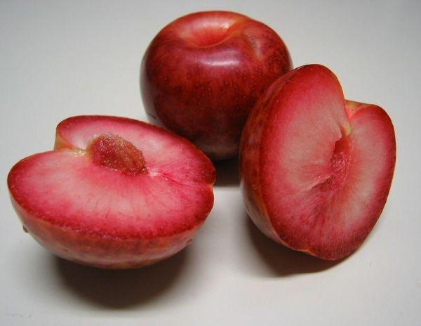 Гибрид сливы с абрикосом
