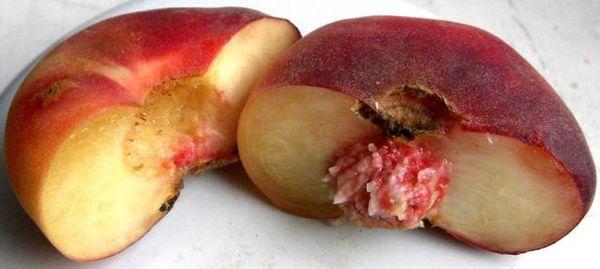 Инжирный персик не является гибридом