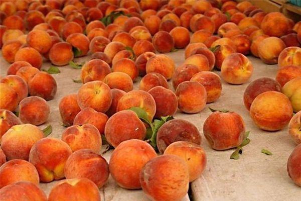 Созревание персика приходится на вторую половину июня