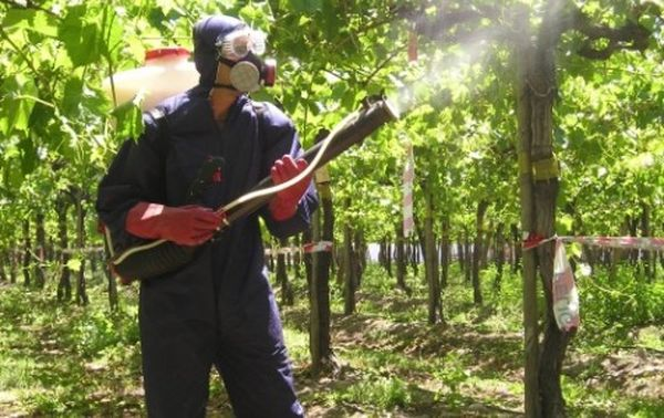 Обработка винограда от вредителей