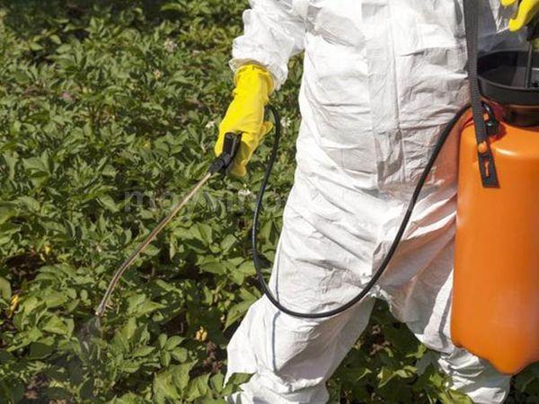 Опрыскивание винограда от болезней и вредителей