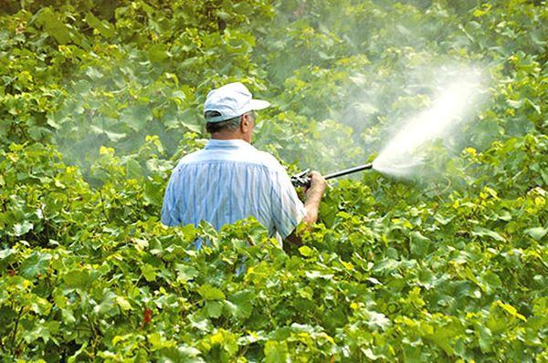 Нужно опрыскивать растения не менее 5 раз за один сезон