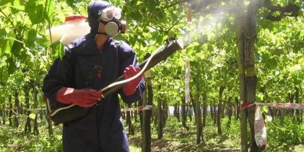 Опрыскивание винограда фунгицидом