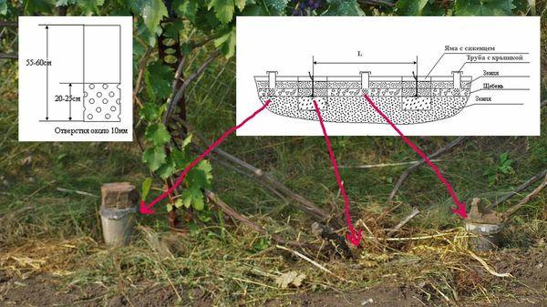 Способ полива винограда