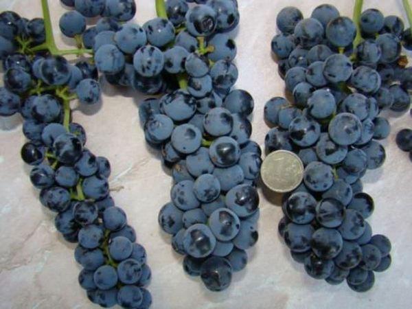 Из сорта Памяти Голодриги делают вино, сок и варенье