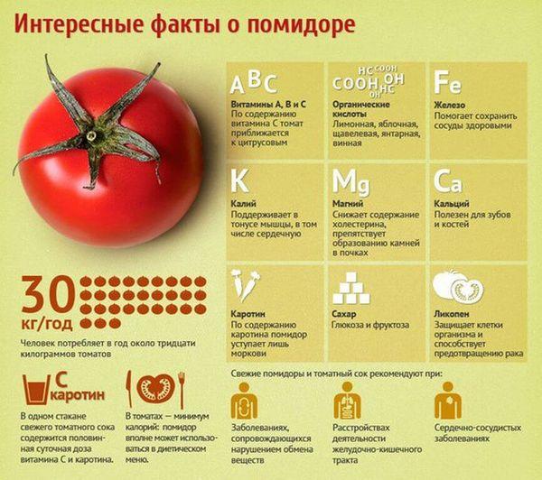 Чем полезны помидоры для человека