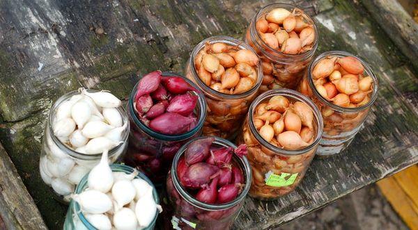 Луковицы шалот на рассаду