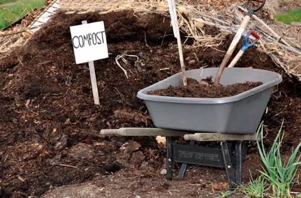 Сливовое дерево необходимо регулярно подпитывать полезными компонентами