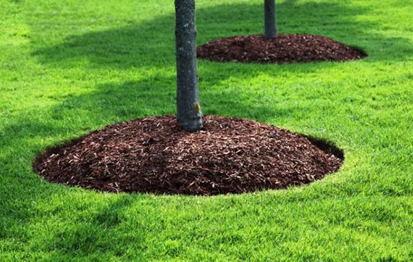 Должна быть видна корневая шейка дерева