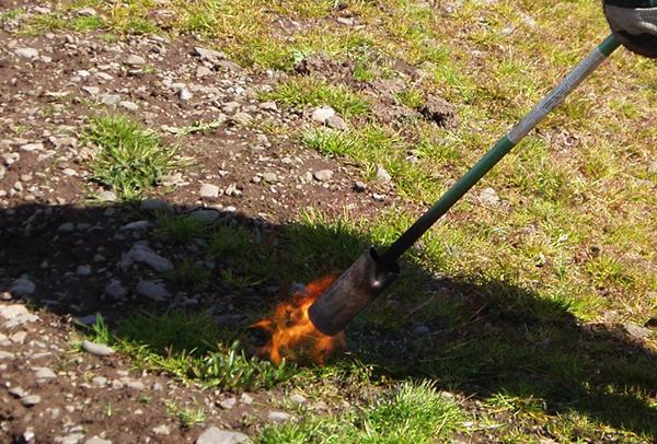 Выжигание сорняков с помощью «Огнемета»