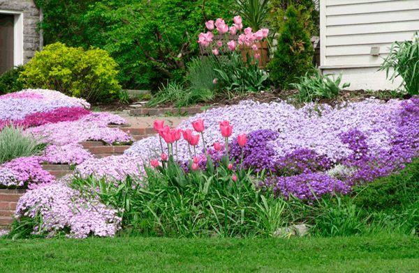 Пейзажные цветники очень популярны среди цветоводов