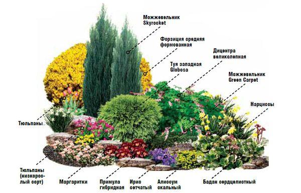 Выбор цветов для цветника