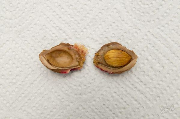 Выращивание сливы из косточки – процесс трудоемкий