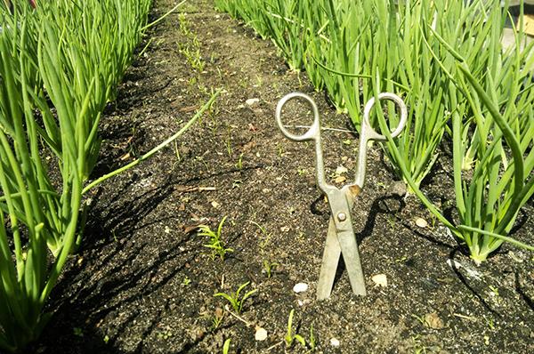 Принцип истощения - обрезание сорняков под уровень грунта