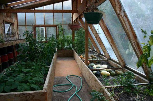 Всесезонный парник для выращивания растений