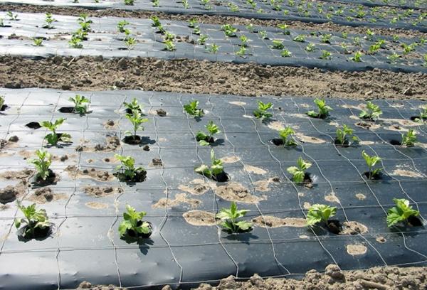 Эффективный способ борьбы с сорняком