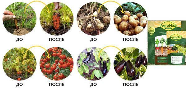 Как действует удобрение AgroMax