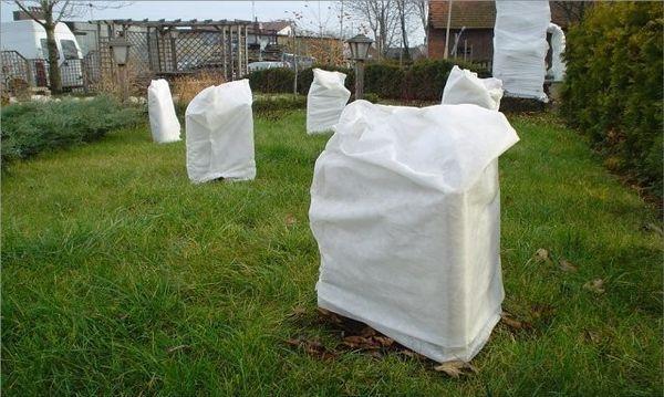 «Агротексом» можно укрывать кустарники и деревья