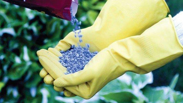Подкормка растений калийно-фосфорными удобрениями