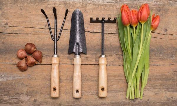 В конце апреля рекомендуется сажать луковичные растения