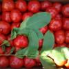 Завязь для огурцов- характеристика, инструкция по применению, почему не растут, сохнут завязи, фото, видео