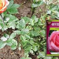 Как разводить фундазол для обработки орхидей